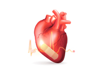 Factors Affecting Heart
